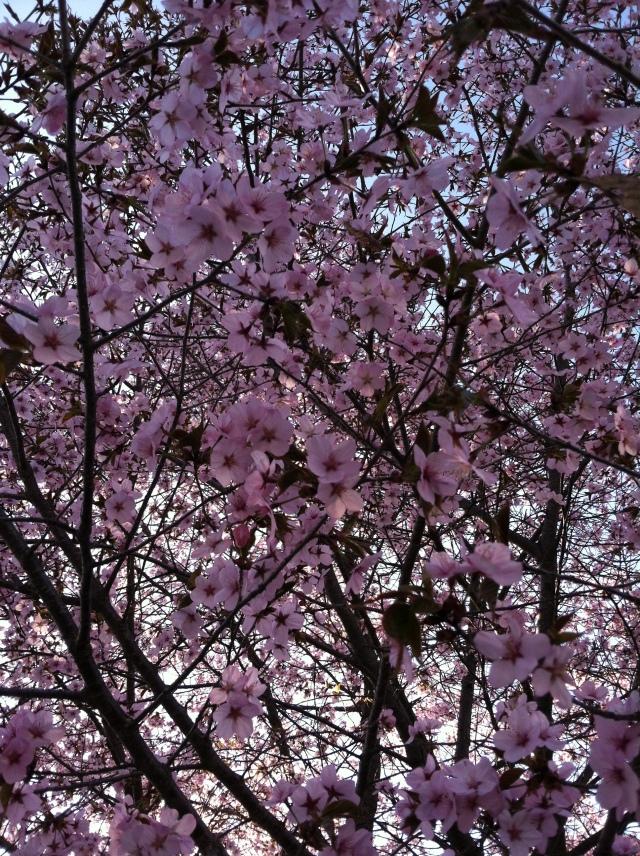 April-May 005